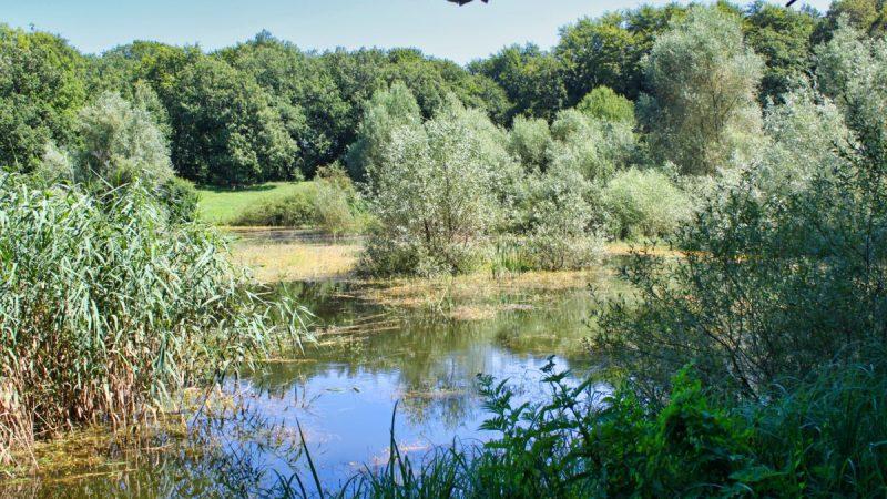 Lake Sovsko
